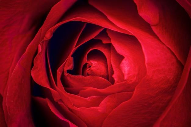 赤いバラの花びらのマクロ撮影