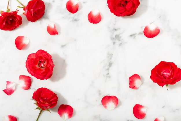 Red rose and petals on marble background. valentines or wedding background.