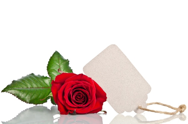 Red rose with empty tag for your text