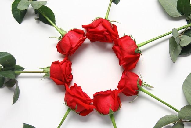 白い背景の上の緑の葉と赤いバラ。バレンタイン・デー