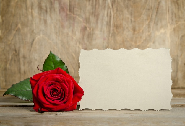 Red rose with paper for text