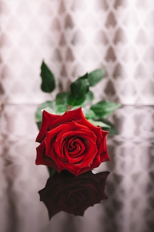 A red rose with a reflection on an unusual beautiful background