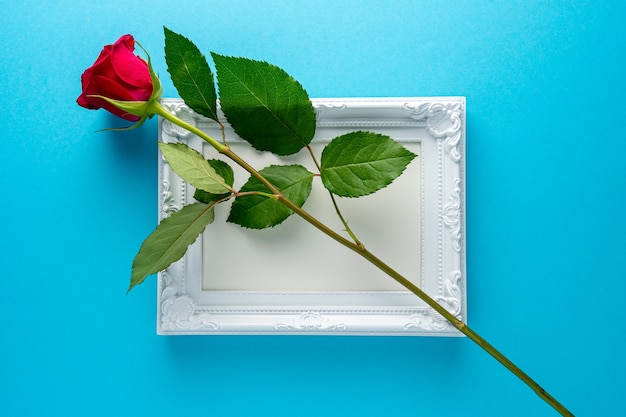Red rose with white frame on blue background.