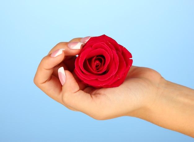 青い表面に女性の手で赤いバラ