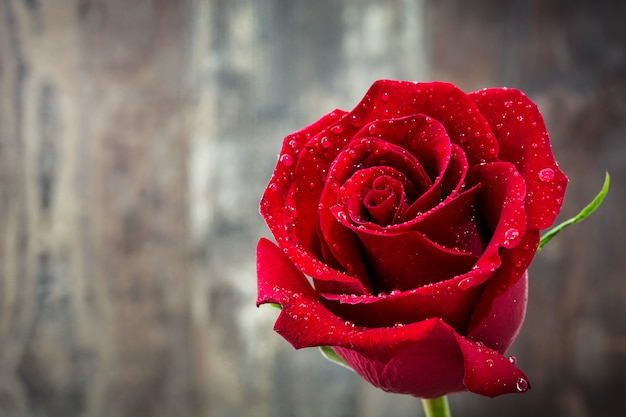 Red rose on wooden table love concept valentines day copyspace.