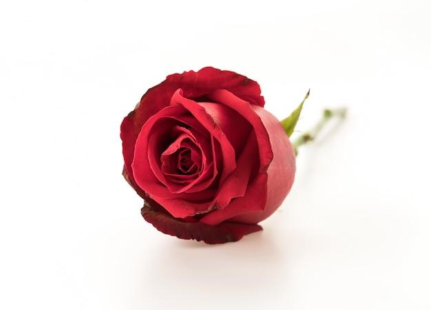 赤いバラ 無料写真