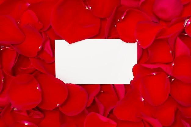 Красные розы и белая бумага