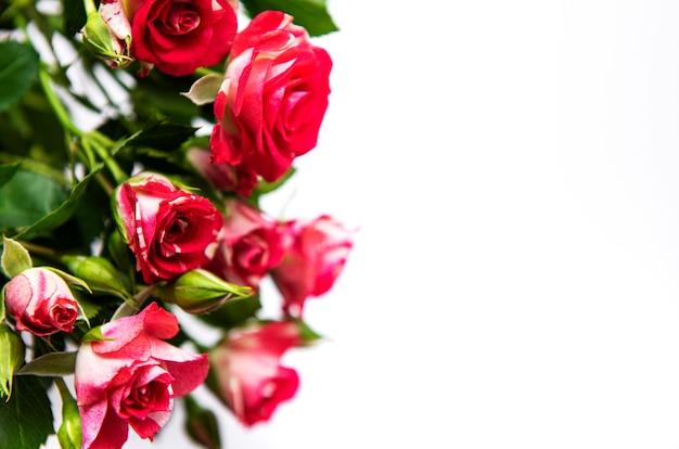 白で隔離の赤いバラの花束
