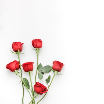 Red roses flowers