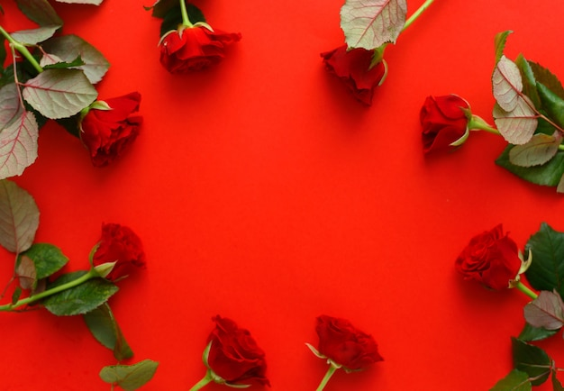 Red roses frame on a red background