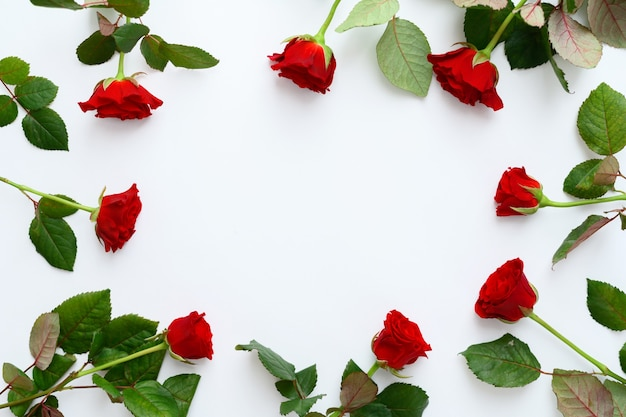 Red roses frame on a white background, copy space.