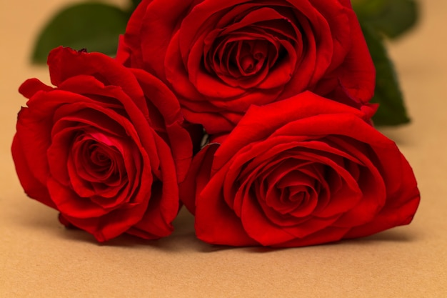 Red roses and hearts on a yellow background. valentine's day background