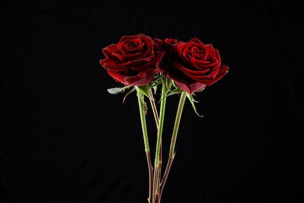 黒の背景の前に赤いバラ