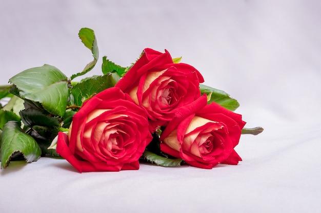 흰색 바탕에 빨간 장미입니다. 휴일 인사말 꽃. 장미 및 기타 꽃 판매 _
