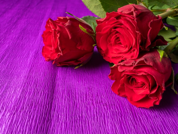보라색에 빨간 장미