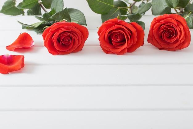 흰색 나무 판자 배경에 빨간 장미