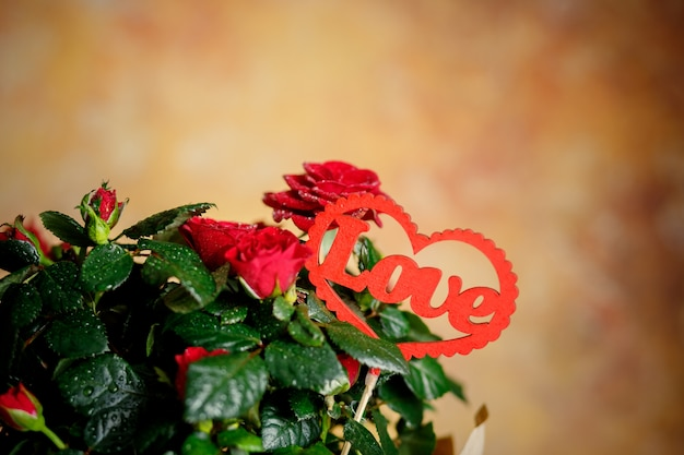 Red roses. plant with red heart