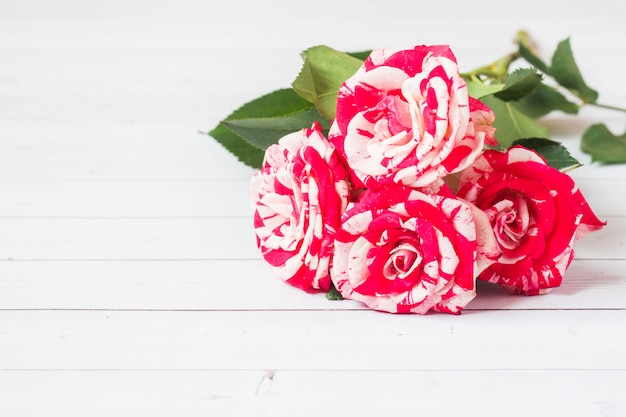 Red roses on white wooden  with copyspace.