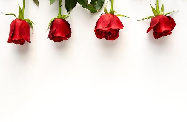흰색 배경으로 빨간 장미