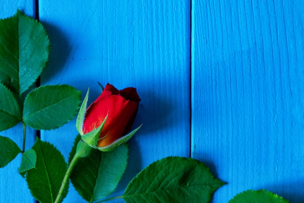 Red roses on a wooden blue table