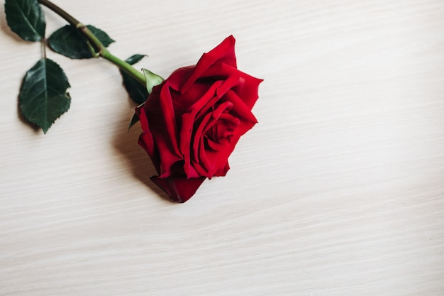 Red roses on wooden board, valentines day background, wedding day
