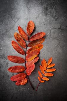 暗い背景に赤いナナカマドの葉のクローズアップ。