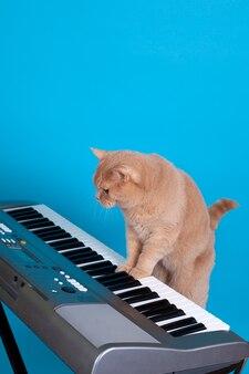 Рыжий шотландский кот учится играть на пианино на музыкальном инструменте