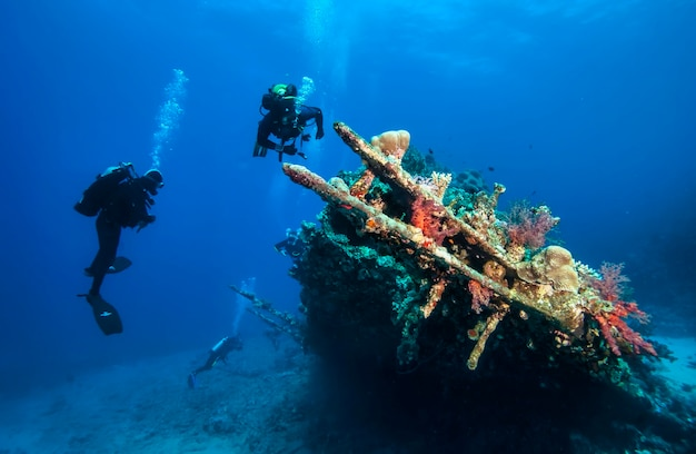 Red sea, africa october 2015: scuba divers explore sunken ships at the bottom of the sea. marine life underwater in blue ocean. observation animal world. scuba diving adventure in red sea