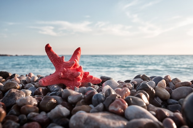 Red sea star on pebble beach