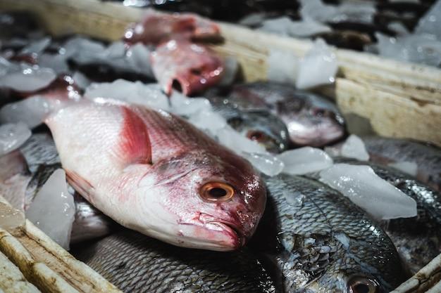 魚市場で赤いスナッパーの魚の詳細
