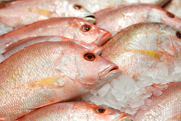 Красный окунь, свежая рыба на льду на рыбном рынке