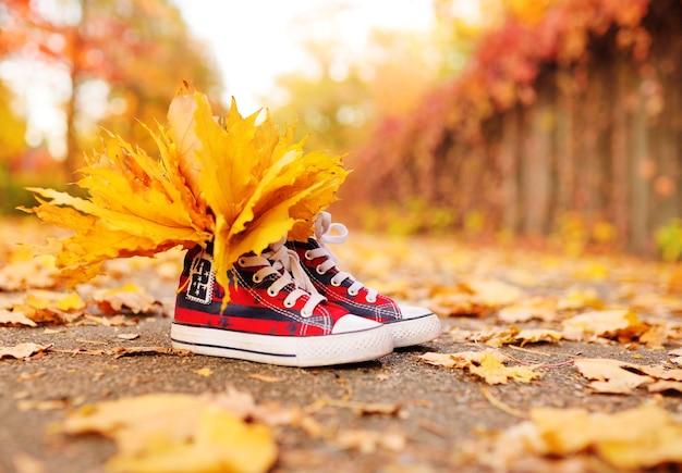 가을 공원을 배경으로 노란 단풍잎이 삽입 된 빨간 운동화 클로즈업