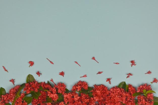 Красный шип цветет украшение на синем фоне. копировать пространство.
