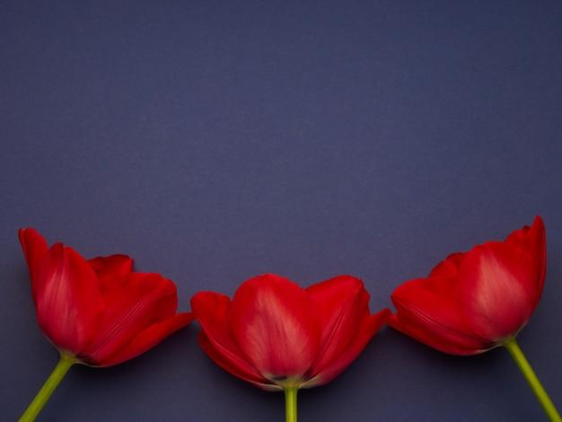 青い紫色の背景、女性の日コピースペースに赤い春チューリップ