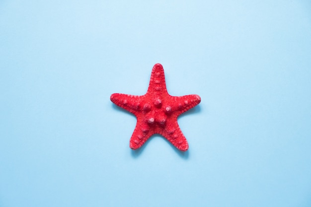 Red starfish on blue sea with copy space