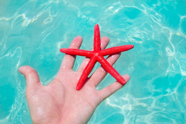 Red starfish in human hand floating