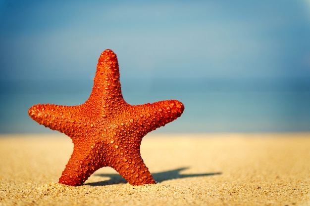 Red starfish on a tropical beach