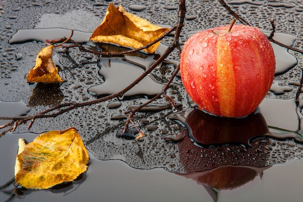 Red striped apple with yellow autumn leaves and a branch in the water