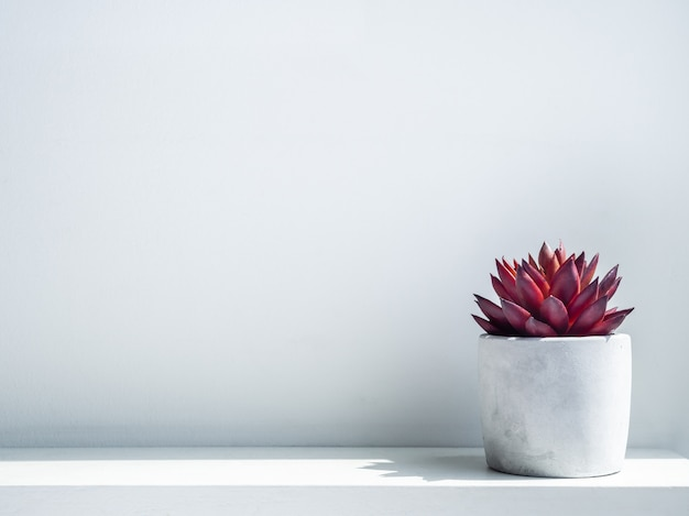 Red succulent plant in modern geometric cement planter on white wood shelf on white wall