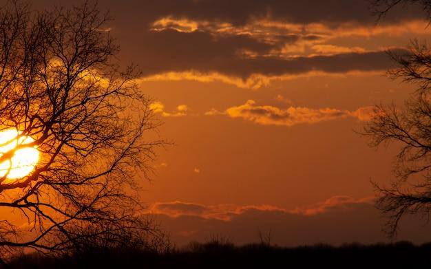 석양에 붉은 태양과 나무의 가지를 통해 보는 구름과 하늘
