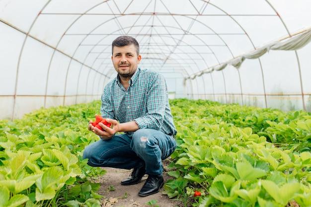 Красная сладкая клубника в ладонях фермера, смотрящего на камеру клубничного сезона, органические выращенные ягоды на размытом фоне теплицы