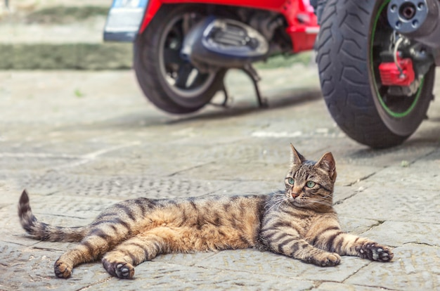 Red tabby cat lying on the pavement.