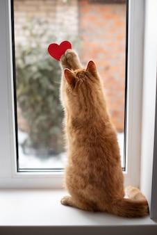 오후에 붉은 마음으로 창턱에 재생 빨간 줄무늬 고양이 닫습니다. 발렌타인 데이 개념.