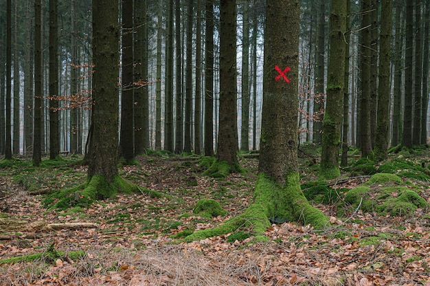 Красная мишень на дереве в лесу