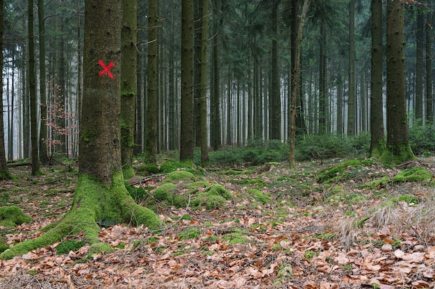 Red target on a single tree in the forest