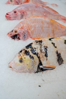 Red tilapia fish with ice in market