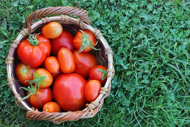 かごの中の赤いトマト。