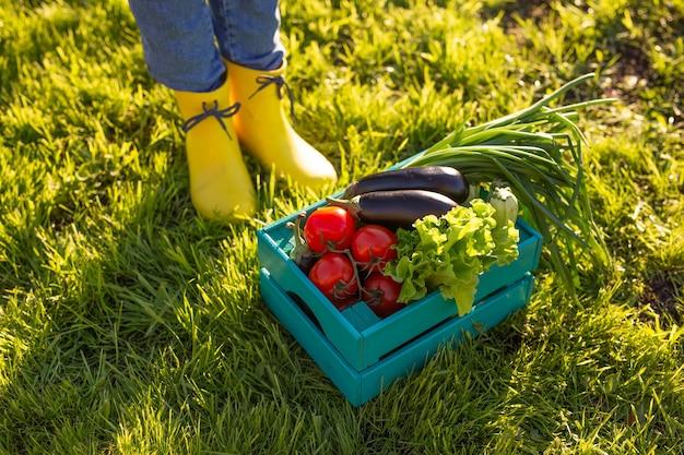 赤いトマトは、日光に照らされた緑の芝生の上の青い木箱に横たわっています。冬に向けた自家菜園の収穫のコンセプト