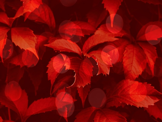 Red toned bokeh foliage trendy background