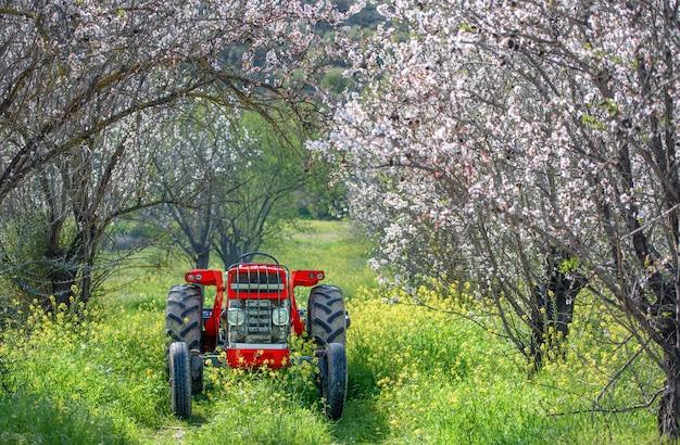 봄철에 피는 아몬드 나무 정원에 있는 빨간 트랙터